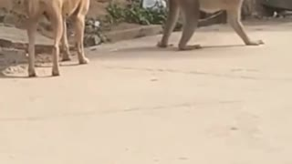 Funny animal video that will make you laugh