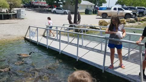 Feeding fish and geese