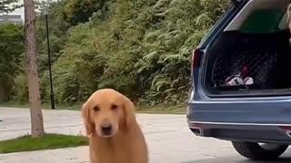 Amazing dog dance