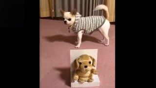 adorable cute pets