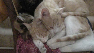 The cats are sleeping.