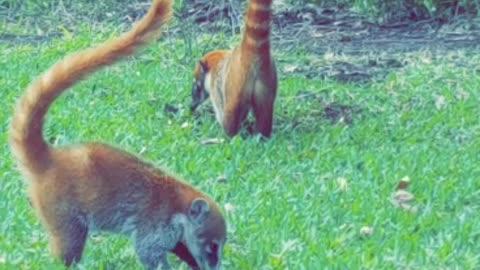 Lemurs all over!