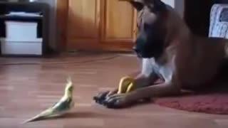 Funny Dog Great Dane vs Bird best