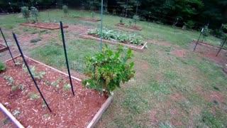 Garden update early July 2021