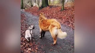 adorable puppu loves its buddy