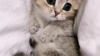 Cute little cat so beautiful