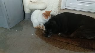 Dog and cat love. Unbelievable !!!