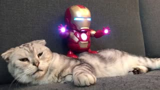 Extremely Tolerant Cat Lets 'Iron Man' Toy Dance All Over Him