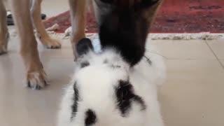Tasty bunny