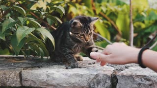 Person Playing with Cat