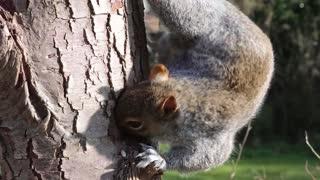 squirrel gy