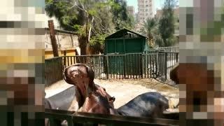 Little Boy Adored By Feeding Family Hippo