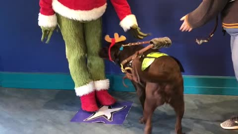 Service dog meets his favorite Christmas character