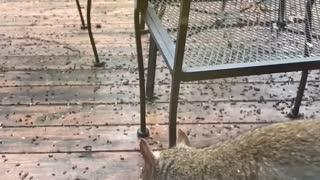 Squirrel slomo