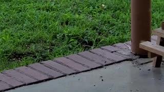 Squirrels Have a Backyard Bonanza