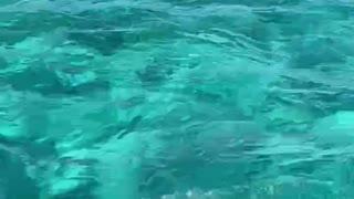 Ocean trip