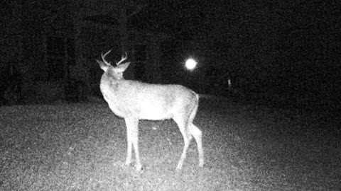 Game Cam Buck Deer Poses Again!