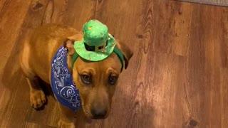 Puppy Rudy
