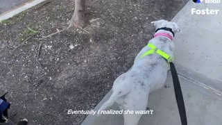 Pittie Who Needed A Muzzle Plays With A Pack Of Dogs Now   The Dodo Foster Diaries