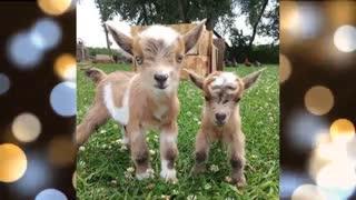 Animales Bebés Vídeos 🔴 Baby Animals Funny 🔴 Animal Video Compilation 2020 Animales Bebés Vídeos