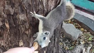 Feeding Squirrels Peanuts in the Park