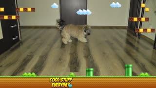 My Dog Playing Like Super Mario - Super Mario Odyssey