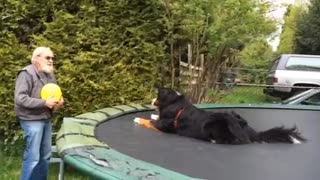 Man and Dog Play Back and Forth Balloon Game