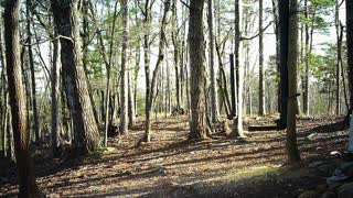 The Woods - 04/04/2021