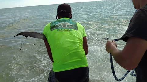 People Catch Massive Tiger Shark in Massachusetts