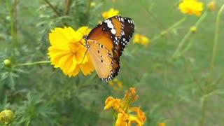 Watch a beautiful butterfly on a flower