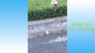 Cute pet funny video compilation