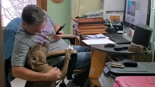 """Dog And Owner Listen To """"That's Amore"""" Together"""