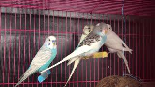Beautiful colorful birds