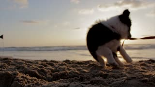 Cute Puppie Playing With Sand