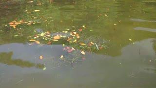 Plastic Straw in Water of Coffee Pot Bayou in St Petersburg Florida
