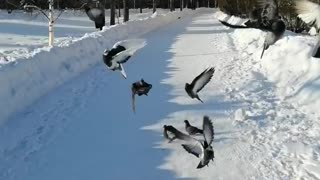 A flock of hungry pigeons.