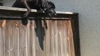 Dog Scales Fence