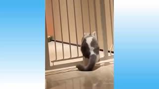 Cute Pets e Funny Animals Compilation