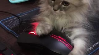 Kitty Claims Computer Mouse