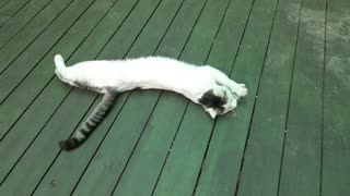 cat lying around