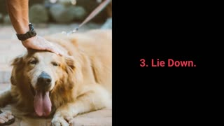 the Basic trainings every dog should know