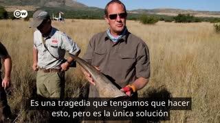 Video: orfanato para rinocerontes