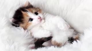 Wonderful cat sounds