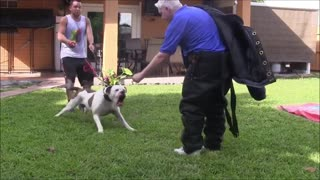 How To Make Dog Become Fully Aggressive With Few Simple Steps
