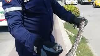 Rescatan boa en Cartagena
