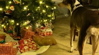 Tempting Christmas tree
