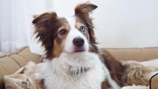 Beautiful dog! :) He has beautiful eyes