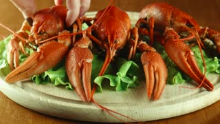 Lobsters on a lettuce bed
