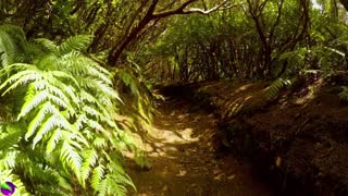 Relaxing music in Nature India