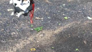 Doggo Enjoys a Good Swing